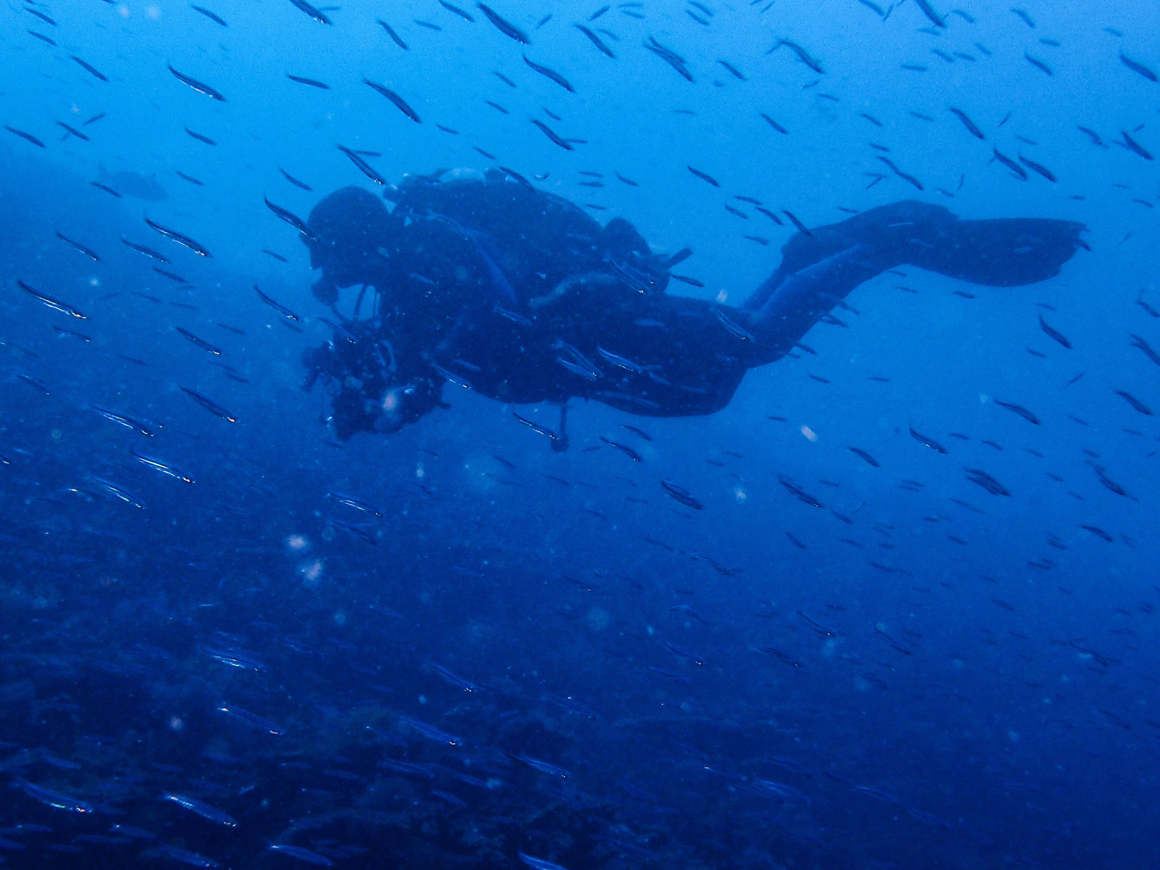 Abrolhos Islands Trip Report October UWA Underwater Club - 23 amazing things divers discovered bottom ocean